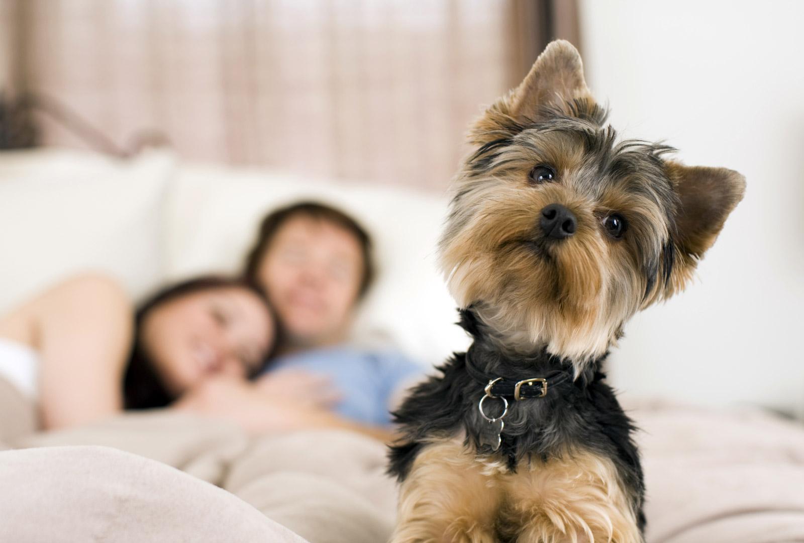 Veja como montar um espaço pet no apartamento